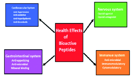 Bioactive peptides and proteins an auspicious class of a nutraceutical is any nontoxic food derived supplement that has scientifically proven health benefits for both the treatment and prevention of disease fandeluxe Images