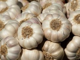 Eating Raw Garlic Could Maintain Good Memory in Old Age - Scientists