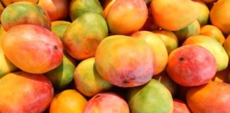 Mango,King of Fruits